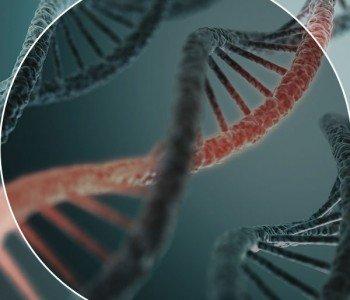 A calvície está no DNA?